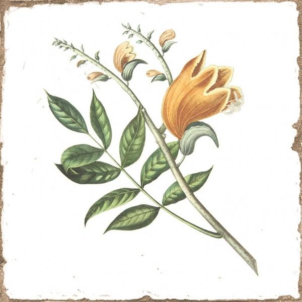 "Wandfliese antik Vintage Shabby Dekor Kräuter Blumen glänzend 15x15 ""Forli Herberia"""
