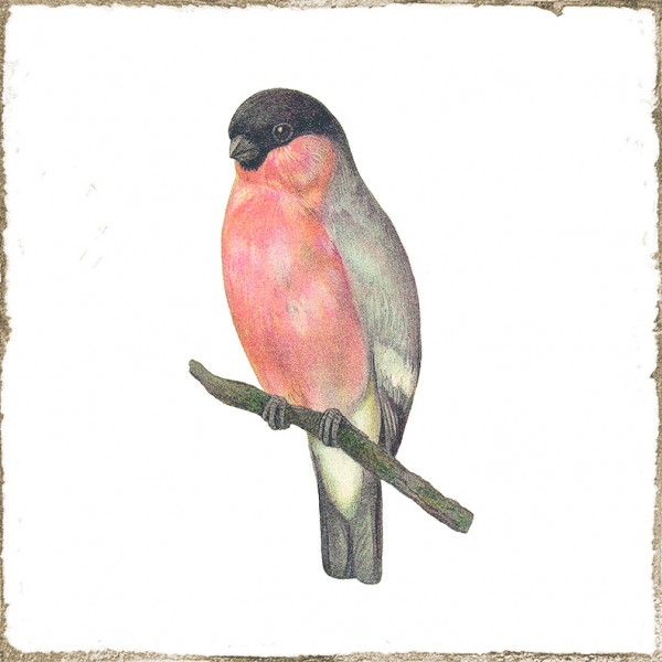 "Wandfliese Retro Dekor Vintage Landhaus antik Shabby Vögel glänzend ""Forli Birds"""